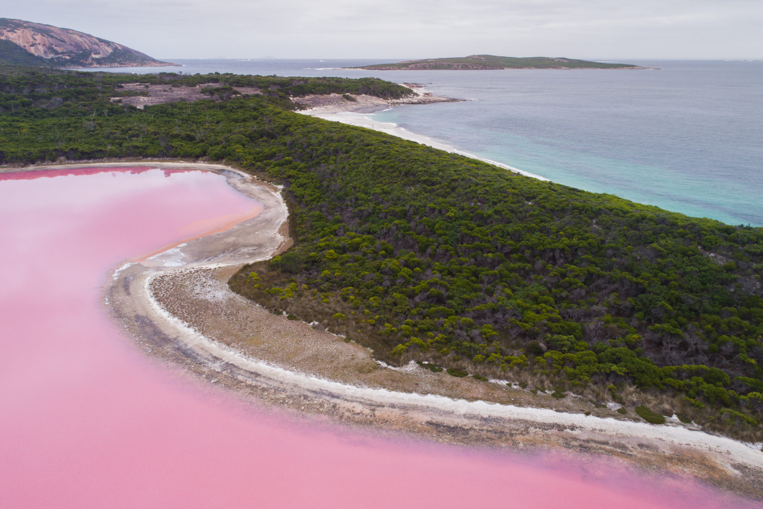 A drone image of a pink salt lake next to green bushland and the ocean