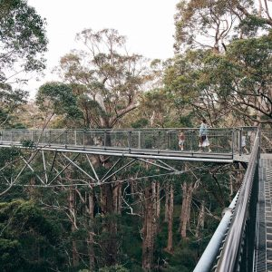 A mother and two children stroll along a metal walkway 40 meters up in the treetops of a tingle forest to show a unique natural attraction along the south west australia road trip The Edge
