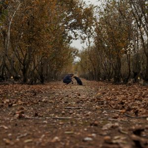 A landscape image of a truffle farm with a man and dog hunting for truffles
